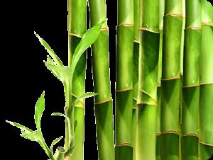 Bamboo-Eco